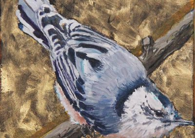 Marsha Schuld - Breasted Nuthatch